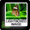 lightboxed-image.png